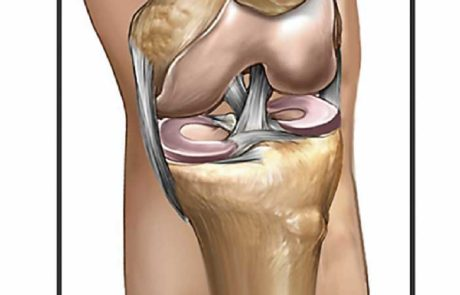 Knee Anatomy 2