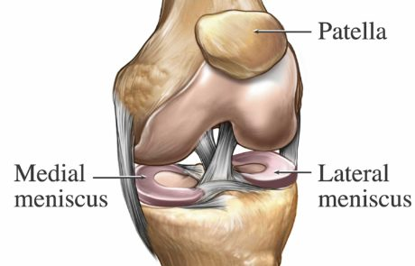 Knee Anatomy 3